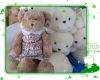 2011hot teddy bear plush toy