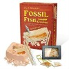Real Fossil fish dig kit with high quality