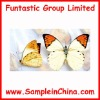 butterfly sample,insect sample(HDB0005)