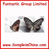butterfly sample,insect sample(HDB0007)