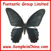 butterfly specimen,insects sample(HDB0025)