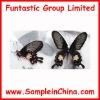butterfly specimen, insects specimen(HDB0010)
