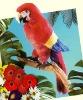 custom plush bird/soft toy parrot