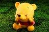 lovely Wynne bear
