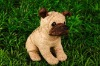 lovely design Shar pei dog
