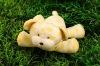 lovely plush stuffed lifelike dog
