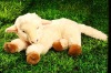 lovely  plush stuffed sheep