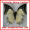 real butterfly specimen, insects specimen(HDB0002)