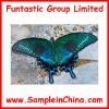 real insects specimen,butterfly sample(HDB0004)