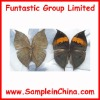 real insects specimen,butterfly sample(HDB0005)