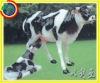 toys Cow